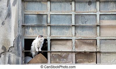 Abandoned cat over warehouse broken window