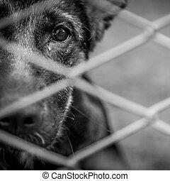 Abandoned dog - A dog alone and abandoned behind a fence.