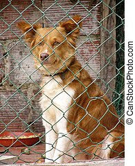Abandoned dog in cage