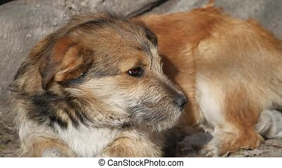 Abandoned dog sits on street - Abandoned dog sits on the...