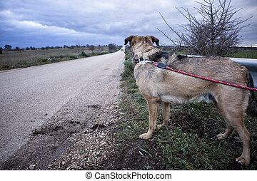 Abandoned Dog Tied with a Leash on a Guard Rail