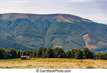 abandoned herdsman shed on hillside near forest. lovely...
