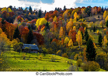 abandoned house in autumn forest on hillside - abandoned...