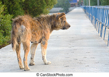 Abandoned stray dog stand on the road.