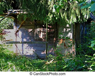 Abandoned wooden hut in the forest