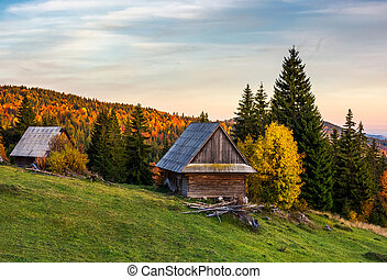 abandoned woodshed in forest. beautiful autumn landscape of...