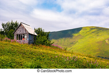 abandoned woodshed on grassy hillside. beautiful summer...
