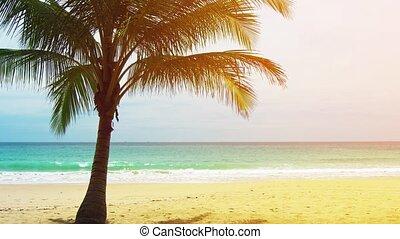 abandonné, palmier, vue, plage, unique, sablonneux