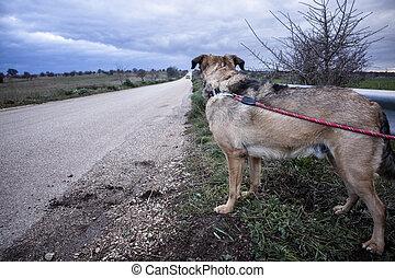 abandonnés, chien