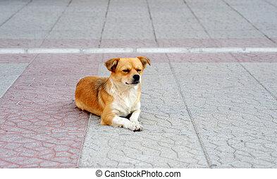 abandonnés, rue, sdf, mignon, chien, trottoir, errant