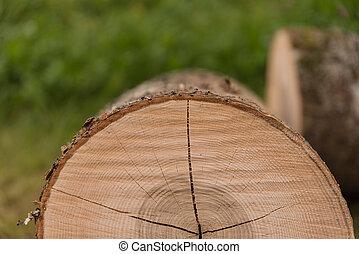 abattu, troncs, exposition, anneaux arbre, année
