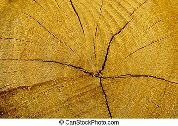 abbattuto, ceppo, quercia, sezione, annuale, -, albero, rings., tronco