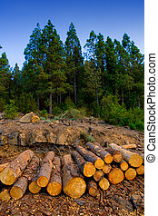 abbattuto, industria, albero,  Tenerife, pino, legname