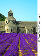 Abbaye de Senanque with lavender field - Provence, France