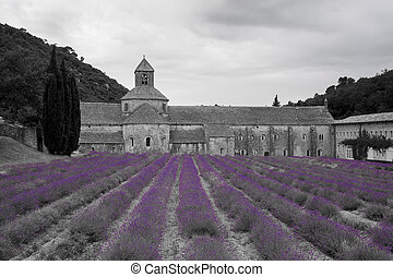 Abbey of Notre Dame of Senanque, Gordes, Provence-Alpes-Cote d'Azur, France