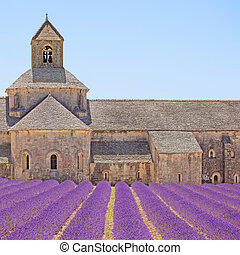 Abbey of Senanque and blooming rows lavender flowers, detail...