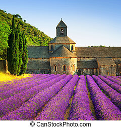 Abbey of Senanque blooming lavender flowers on sunset....