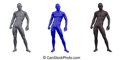 abbildung, 3d, menschliche , übertragung