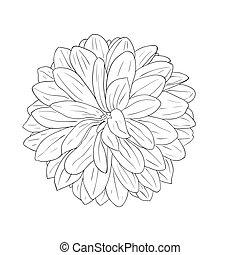 abbildung, element, hand-drawn, vektor, design, blumen-