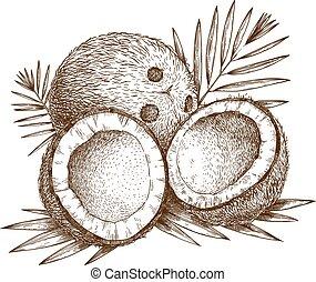 abbildung, kokosnuss