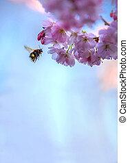 abeille, arbre fleurissant, printemps