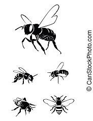 abeille, collection, ensemble