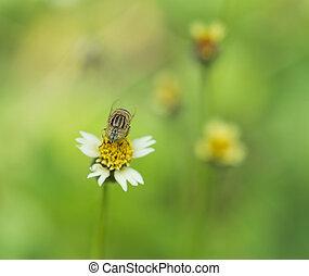 abeille, sur, herbe, fleur