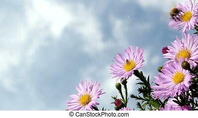 abeilles, fleurs