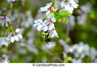 abeja, en, un, flor