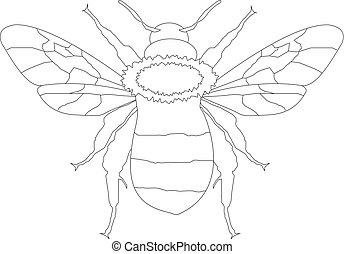 abeja miel, dibujo lineal