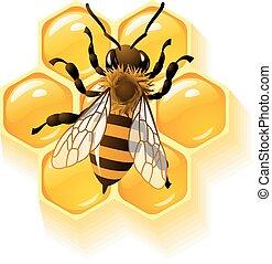 abeja, panales, vector