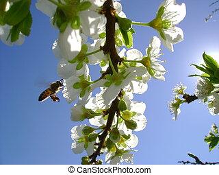 abeja, trabajando