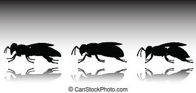 abeja, tres, negro, vector, siluetas