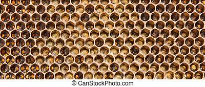 abejas, futuro, larvas