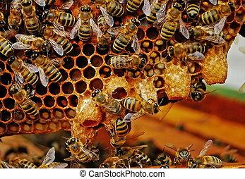 abejas, swarming., antes