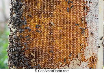 abejas, viejo, beewax, peine