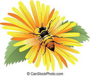 abelha, amarela, margarida
