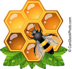 abelha, favo mel