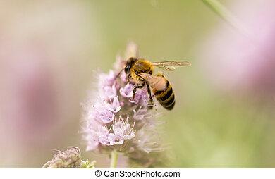 abelha, ligado, um, flor, em, natureza