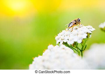 abelha, ligado, um, flor, em, primavera, dia