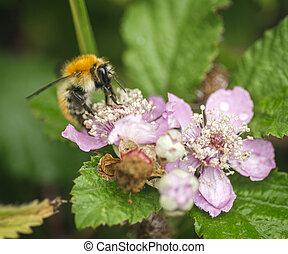 abelha, ligado, um, flor