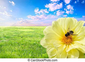 abelha, no trabalho
