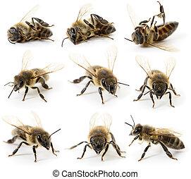 abelhas, jogo