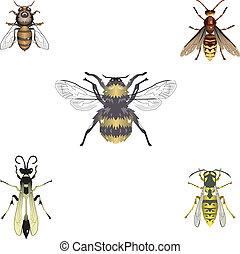 abelhas, vetorial, vespas, cinco
