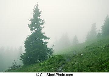abete americano, in, denso, nebbia, montagne