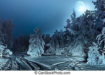 abete, pieno, moon., neve, nightly, foresta, paesaggio
