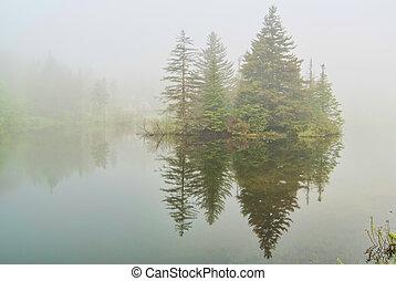 abete rosso, vermont, nebbia, lago
