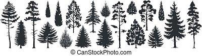 abeti, vettore, templates., sempreverde, forme, albero, silhouettes., pino, nero, natura, albero, terreno boscoso, abeti rossi, foresta, selvatico
