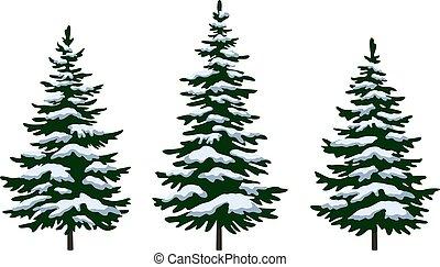 abeto, árvores natal