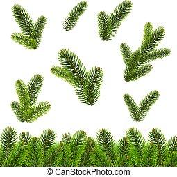 abeto, branca, árvore, isolado, fundo